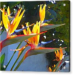 Bird Of Paradise Backlit By Sun Acrylic Print by Amy Vangsgard