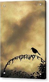 Bird On Branch Montage Acrylic Print by Dave Gordon