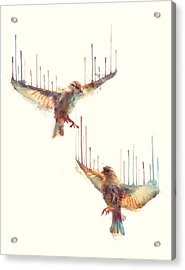 Birds // Awake Acrylic Print by Amy Hamilton