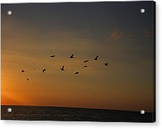 Birds Fly Into The Wind Above The Gulf Acrylic Print by Stacy Gold