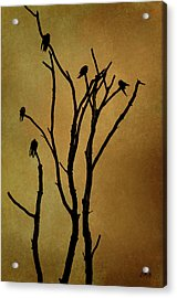 Birds In Tree Acrylic Print by Dave Gordon