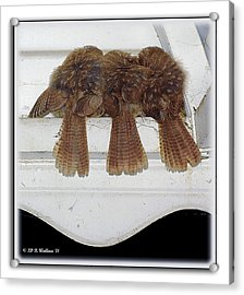 Birds Of A Feather Acrylic Print by Brian Wallace