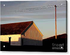Birds On A Wire Acrylic Print by Wingsdomain Art and Photography