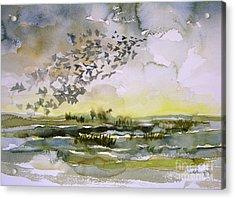 Birds Rising I Acrylic Print by Julianne Felton