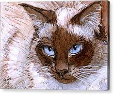 Birman Cat - Blue Eyes. Acrylic Print by Svetlana Ledneva-Schukina