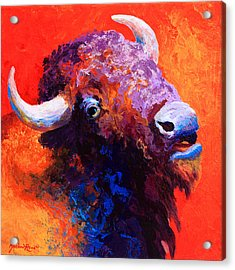 Bison Attitude Acrylic Print by Marion Rose