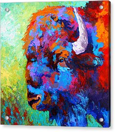 Bison Head II Acrylic Print by Marion Rose