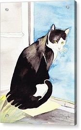 Black And White Cat Acrylic Print by Michaela Bautz