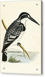 Black And White Kingfisher Acrylic Print by English School