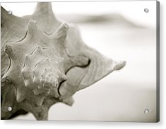 Black And White Seashell Acrylic Print by Kicka Witte - Printscapes