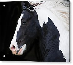 Black And White Study Acrylic Print by Terry Kirkland Cook