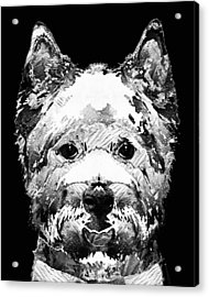 Black And White West Highland Terrier Dog Art Sharon Cummings Acrylic Print by Sharon Cummings