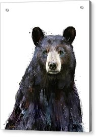 Black Bear Acrylic Print by Amy Hamilton