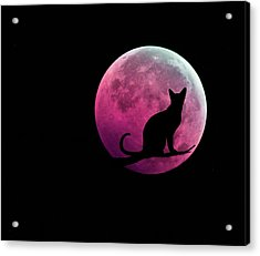 Black Cat And Pink Full Moon Acrylic Print by Marianna Mills