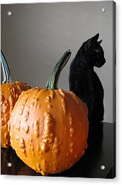 Black Cat Silhouette  Acrylic Print by Lindie Racz