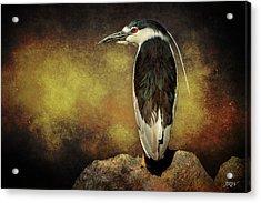 Black-crowned Night Heron Night Vision Acrylic Print by John Williams