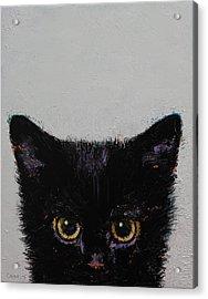 Black Kitten Acrylic Print by Michael Creese