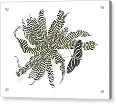 Black Magic Acrylic Print by Penrith Goff