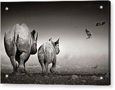 Black Rhino Cow With Calf  Acrylic Print by Johan Swanepoel