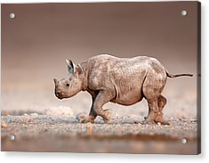Black Rhinoceros Baby Running Acrylic Print by Johan Swanepoel
