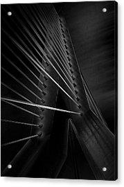 Black Swan Acrylic Print by Arnd Gottschalk