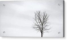 Black Tree White Sky Acrylic Print by Scott Norris