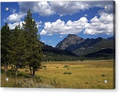 Blacktail Plateau Acrylic Print by Marty Koch