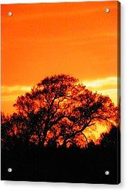 Blazing Oak Tree Acrylic Print by Karen Wiles