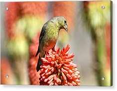 Blending In Acrylic Print by Donna Kennedy