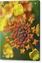 Blooming Art Acrylic Print by Patricia McKay