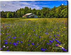 Blooming Country Meadow Acrylic Print by Marvin Spates