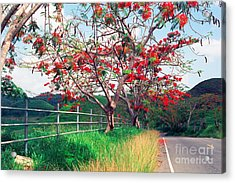 Blooming Flamboyan Trees Along A Country Road Acrylic Print by George Oze