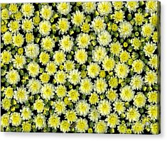 Blossoms Acrylic Print by Christian Slanec