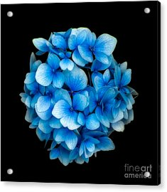 Blue Acrylic Print by Adrian Evans