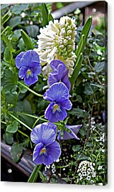 Blue And White Acrylic Print by Robert Sander