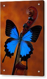 Blue Butterfly On Violin Acrylic Print by Garry Gay