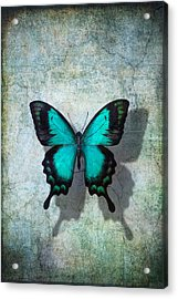 Blue Butterfly Resting Acrylic Print by Garry Gay