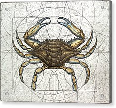 Blue Crab Acrylic Print by Charles Harden