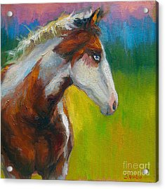 Blue-eyed Paint Horse Oil Painting Print Acrylic Print by Svetlana Novikova