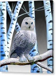 Blue-eyed Snow Owl Acrylic Print by Glenn Holbrook