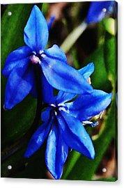 Blue Floral Acrylic Print by David Lane