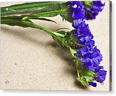 Blue Flower Acrylic Print by Svetlana Sewell