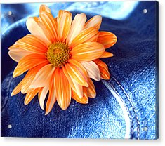 Blue Jeans And Daisies Acrylic Print by Wendy Mogul