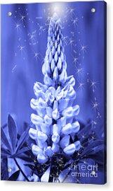 Blue Magic Sparkle Lupine  Acrylic Print by Cathy  Beharriell