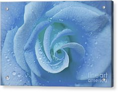 Blue Rose Acrylic Print by Julia Hiebaum