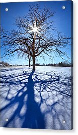 Blue Skies Smiling At Me Acrylic Print by Phil Koch