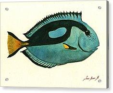 Blue Tang Fish Acrylic Print by Juan Bosco