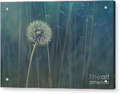 Blue Tinted Acrylic Print by Priska Wettstein