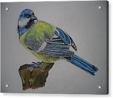 Blue Tit Acrylic Print by Tanya Patey