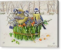 Blue Tits In Leaf Nest Acrylic Print by EB Watts